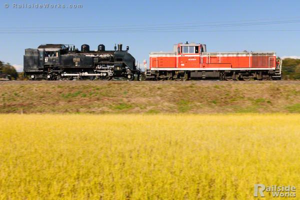 真岡鐵道C11配給列車、秋の水戸線を行く
