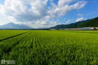 583系 快速「あいづ」、会津の光景をたっぷり浴びて